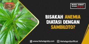 Read more about the article Bisakah Anemia Diatasi dengan Sambiloto?