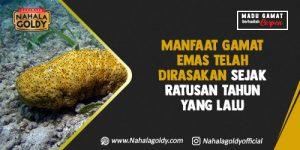 Read more about the article Manfaat Gamat Emas Telah Dirasakan Sejak Ratusan Tahun yang Lalu