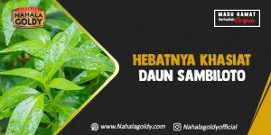 Read more about the article Hebatnya Khasiat Daun Sambiloto