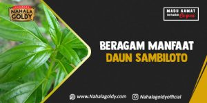 Read more about the article Beragam Manfaat Daun Sambiloto