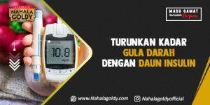 Read more about the article Turunkan Kadar Gula Darah dengan Daun Insulin