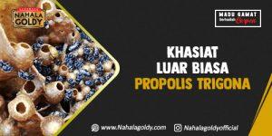 Read more about the article Khasiat Luar Biasa Propolis Trigona