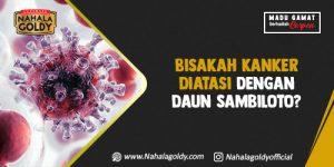 Read more about the article Bisakah Kanker Diatasi dengan Daun Sambiloto?