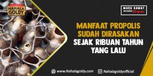Read more about the article Manfaat Propolis Sudah Dirasakan Sejak Ribuan Tahun yang Lalu