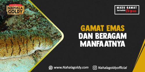 You are currently viewing Gamat Emas dan Beragam Manfaatnya